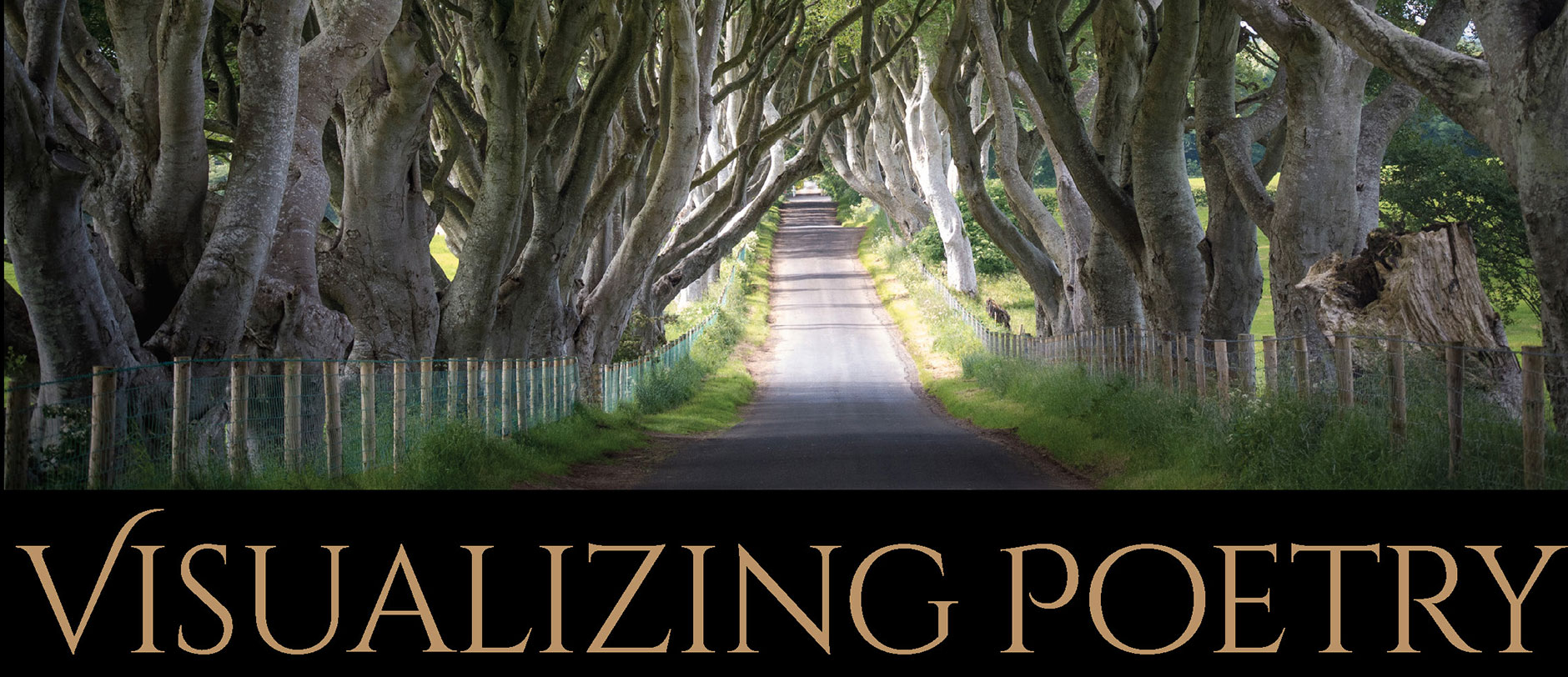 """""""Visualizing Poetry"""" by Eileen McCarney Muldoon and Olaf Willoughby"""